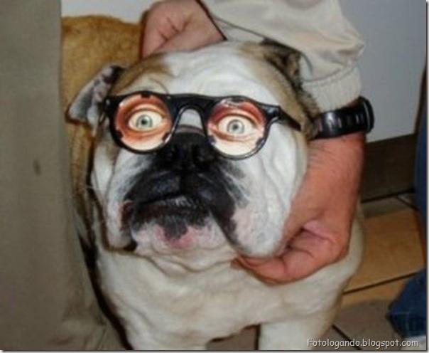 Animais de Oculos (9)