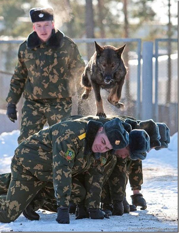 na Bielorrússia os cachorros treinam você (2)