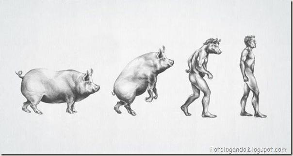 Diferentes tipos de evolução (19)