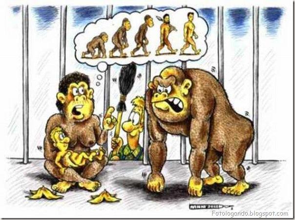 Diferentes tipos de evolução (12)