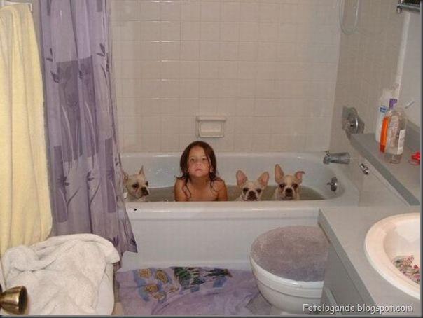 Cães no banho (13)