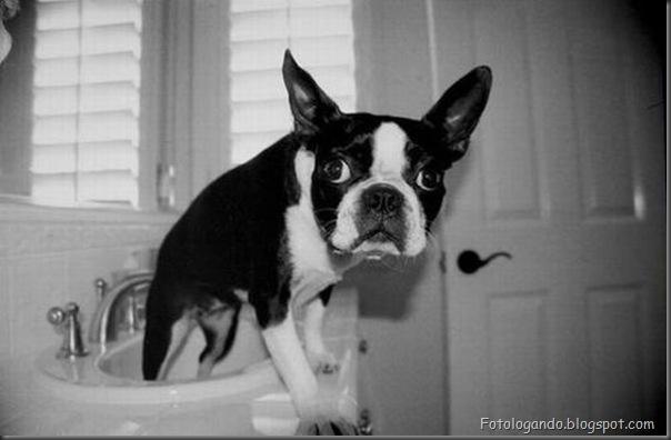 Cães no banho (5)