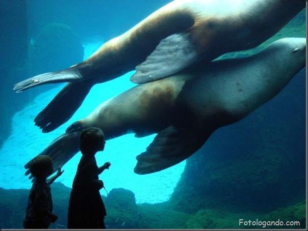 Fotos de animais no zoo capturadas no momento certo (28)