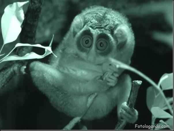 Fotos de animais no zoo capturadas no momento certo (25)