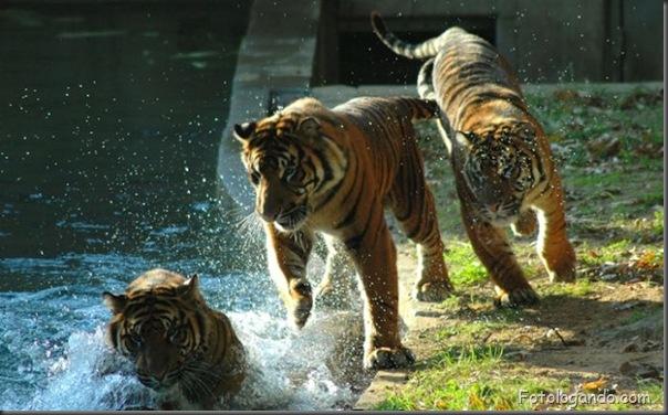 Fotos de animais no zoo capturadas no momento certo (22)