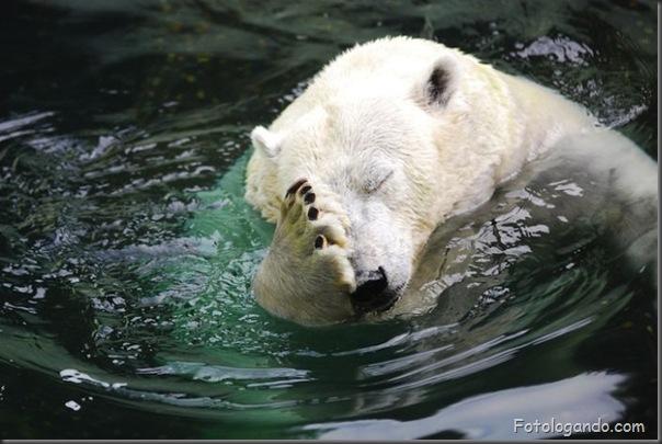 Fotos de animais no zoo capturadas no momento certo (19)