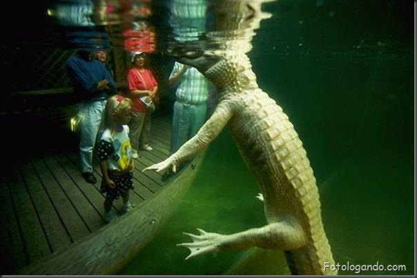 Fotos de animais no zoo capturadas no momento certo (1)