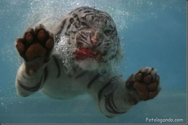 Fotos de animais no zoo capturadas no momento certo (14)