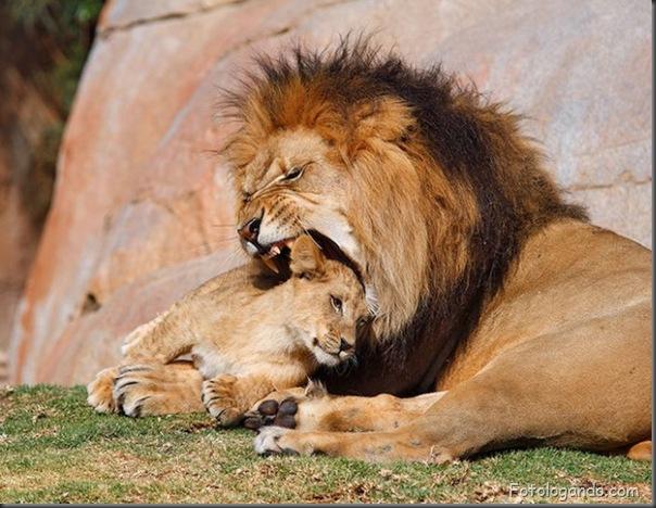 Fotos de animais no zoo capturadas no momento certo (10)