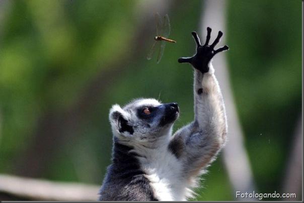 Fotos de animais no zoo capturadas no momento certo (9)