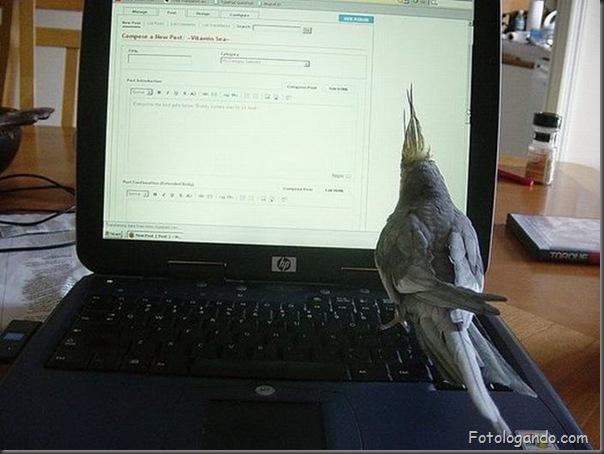 Animais no computador (14)