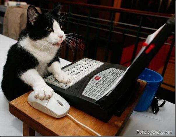 Animais no computador (13)