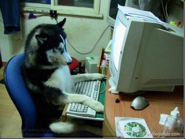 Animais no computador