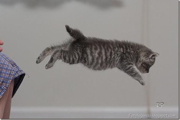 momento oinn especial gatos (12)