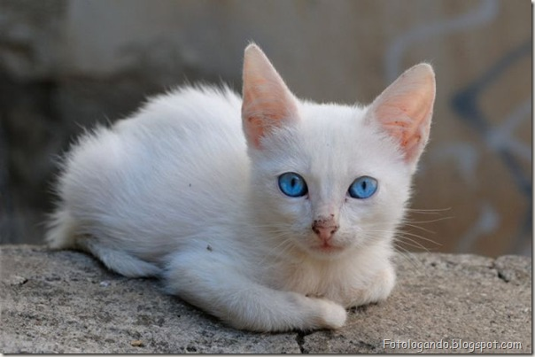 momento oinn especial gatos (29)