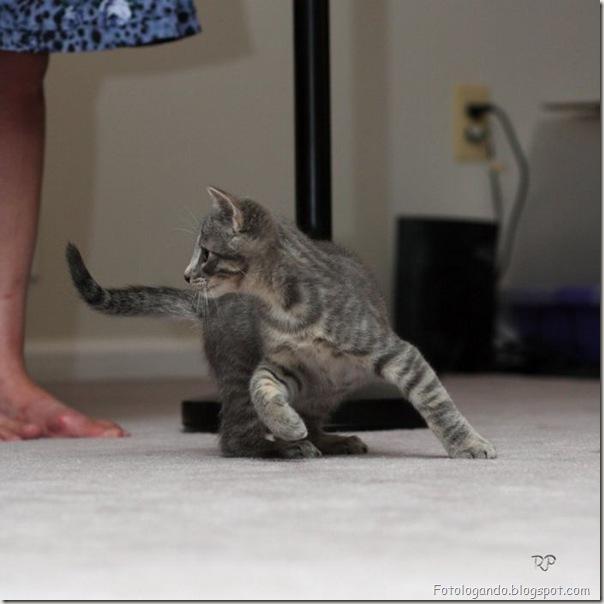 momento oinn especial gatos (22)