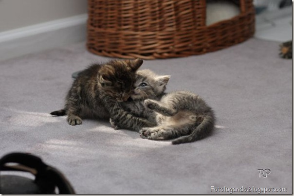 momento oinn especial gatos (11)
