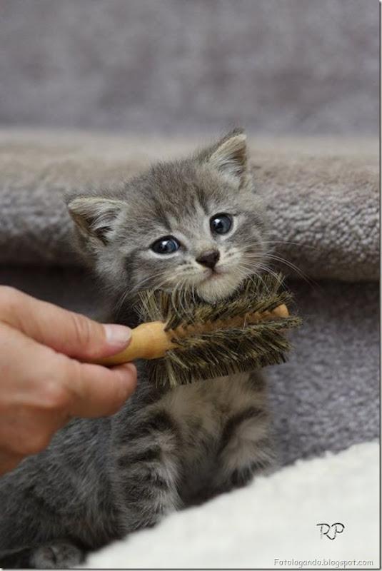momento oinn especial gatos (9)