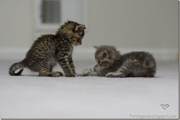 momento oinn especial gatos (6)