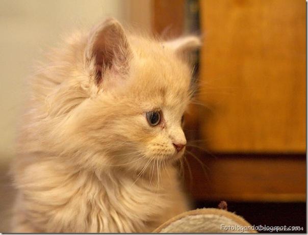 momento oinn especial gatos (58)