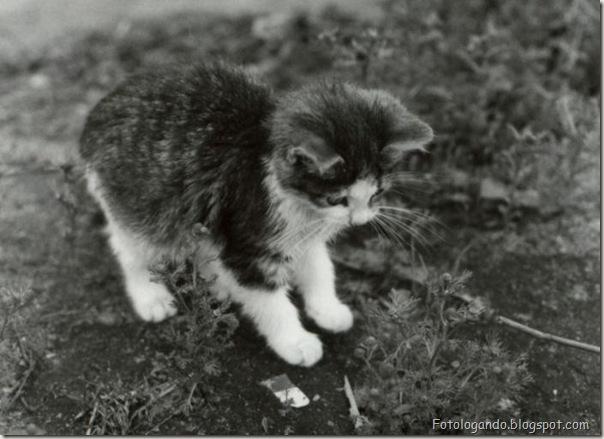 momento oinn especial gatos (57)