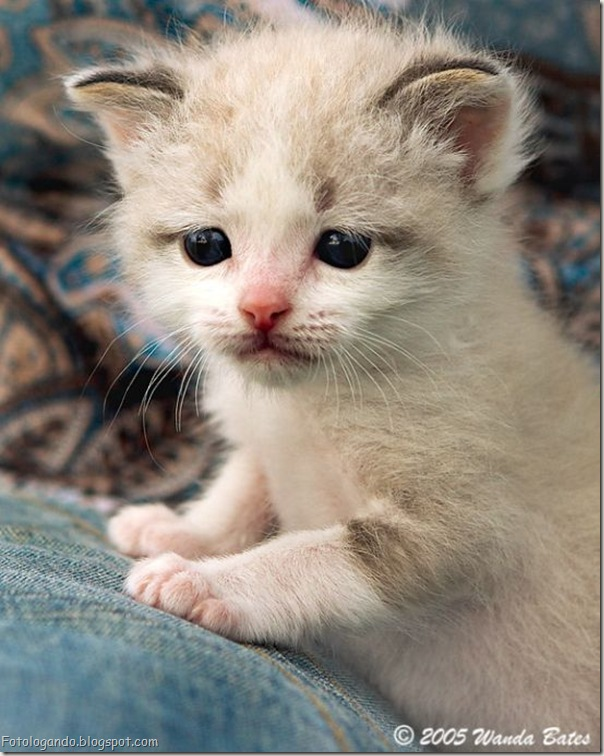momento oinn especial gatos (65)