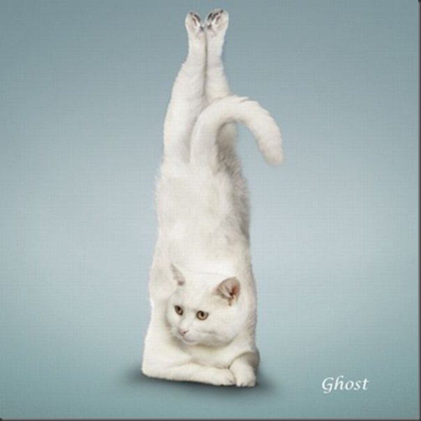 A yoga dos gatos (5)