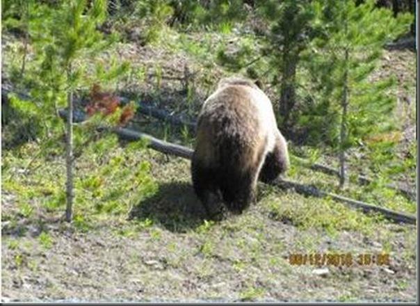 Jantar romantico entre ursos (8)