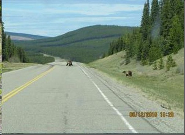 Jantar romantico entre ursos (9)