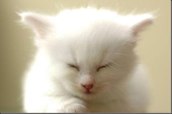 Um gatinho que parece um brinquedo (3)