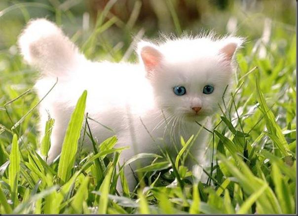Um gatinho que parece um brinquedo (1)