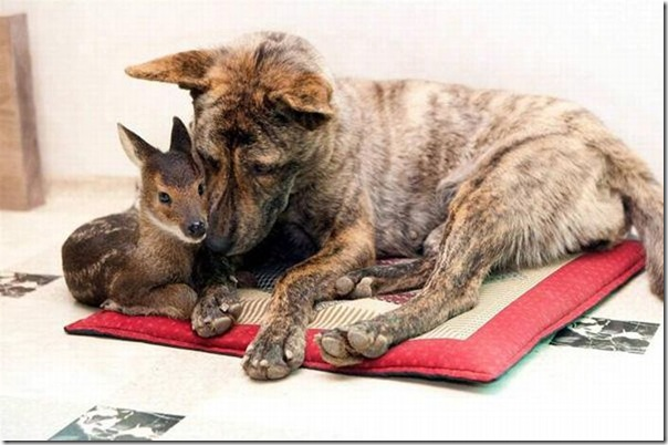 animal_adoptions_08