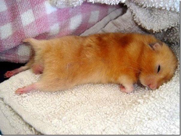 Animais fofos dormindo (3)