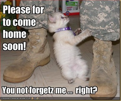 funny-pictures-kitten-asks-soldier-to-come-home-soon
