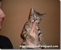 Кот, проявляющий признаки недовольства 1