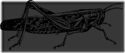 1197099789387674303johnny_automatic_locust_svg_med