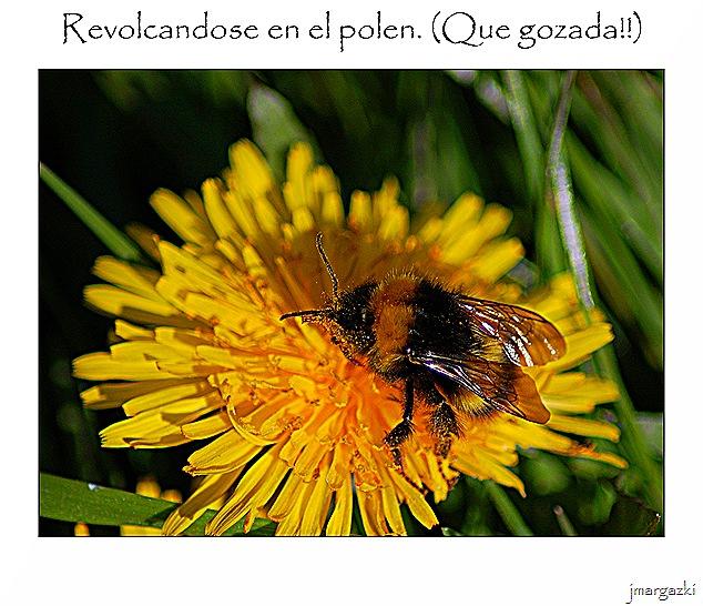 revolcandose_en_el_polen
