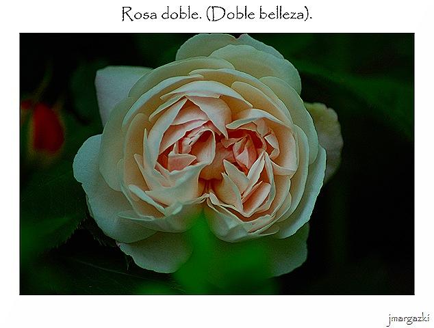 rosa_doble