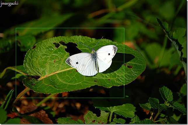 mariposa01 20-09-2008
