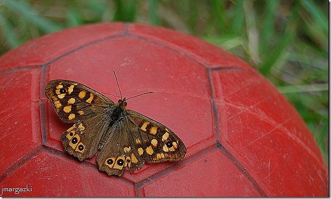 mariposa futbolera