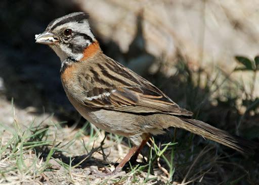 Bird. Foto: Horacio Iannella