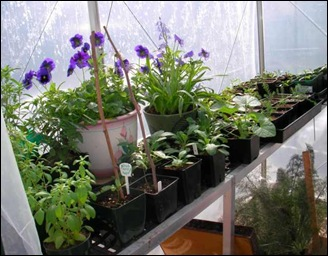 greenhouse3-21
