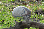 The rugby ball in its natural setting.