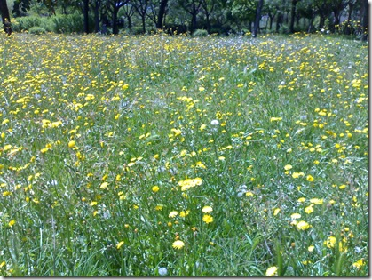 Aqui llega la primavera psigetdo