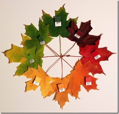 leafycolourwheel