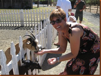 Fainting goats, don't scare 'em!