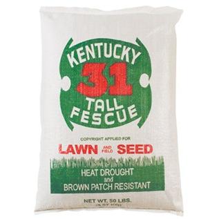 kentucky-31-tall-fescue-grass-seed-16205