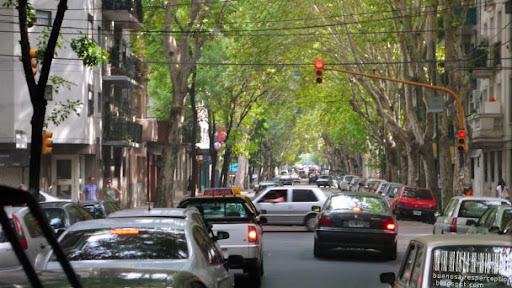 Tipa Trees and Traffic in Palermo, Buenos Aires