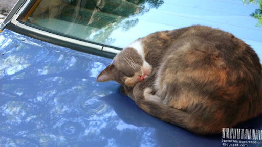 Sleeping Lolcat on a Car Trunk in Buenos Aires, Argentina