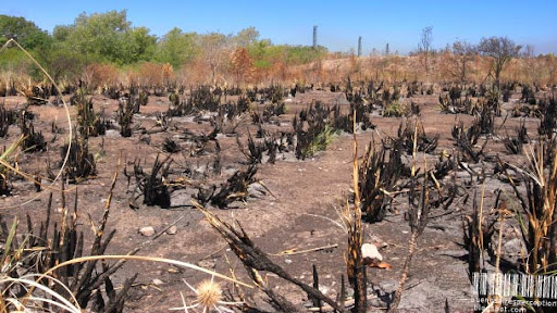 After a Bushfire in the Costanera Sur Ecological Reserve in Buenos Aires, Argentina